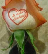 Я тебя люблю (в сердце